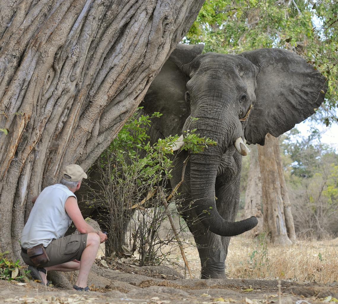 Brian Keating and an elephant